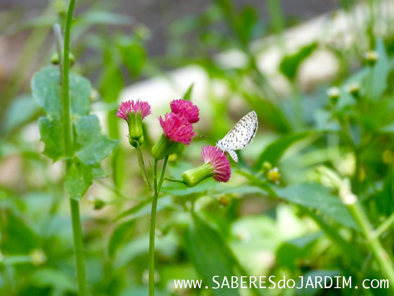 Caçadora de Plantas - Identificar Espécies e Coletar Sementes- Pincel de Estudante e Borboleta