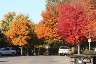 Fall Color.7200