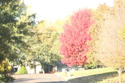 Fall Color.7210