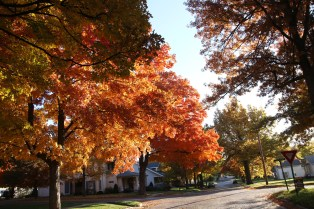 Fall Color.7230