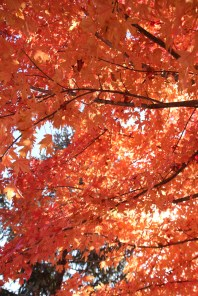 Fall Color.7256
