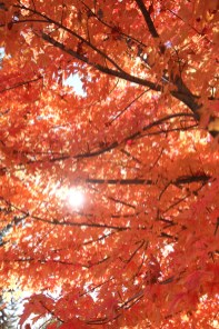 Fall Color.7258