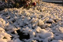 First Snow 2018.9014