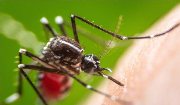 Jhunjhunu girl died in Jaipur due to Dengue