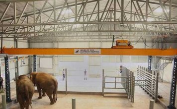 india's First Elephant Specialty Hospital opens in mathura