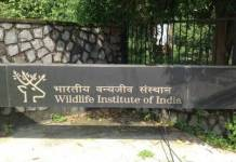Project assistant wildlife institute of india recruitment