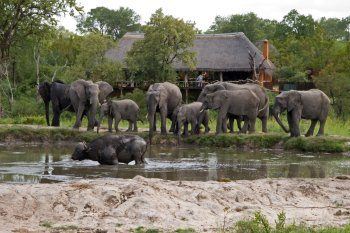 Simbambili Game Lodge Wildlife Waterhole