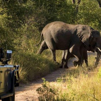 Narina Lodge Accommodation Activities Elephant Game Drive