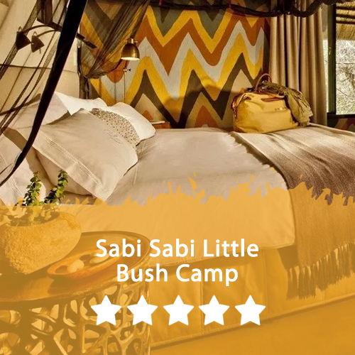 Sabi Sabi Little Bush Camp Featured Image