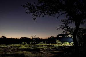Leopard Hills Private Game Reserve Bush Evening