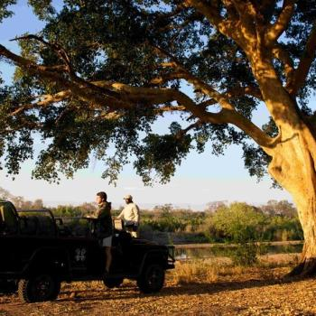 Londolozi Private Granite Suites Accommodation Activities Game Drives