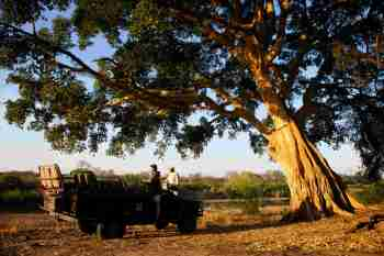 Londolozi Private Granite Suites Game Drive Stop
