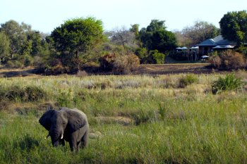 MalaMala Sable Camp Elephant visits Camp
