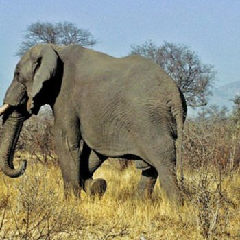 Idube Game Lodge Accommodation Elephant