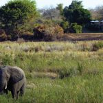 Mala Mala Game Reserve Sable Camp Elephant visits Camp