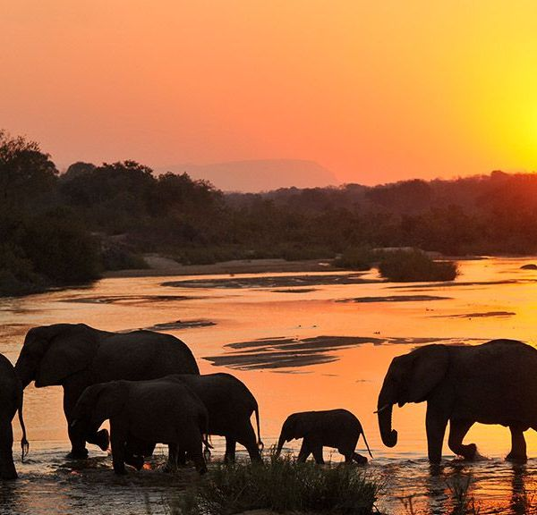 Inyati Game Lodge Elephant Sunset