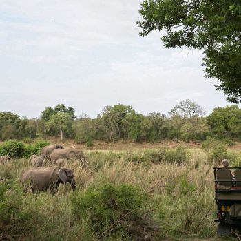 Umkumbe Safari lodge Elephant Game Drive