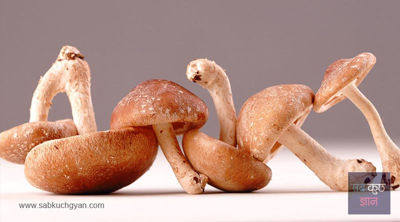 14-Shiitake-mushrooms