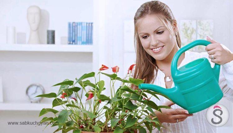 indore-plants-decoist