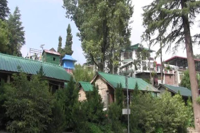 travel-place-peace-and-happiness-should-go-to-this-place-in-uttarakhand-dhanaulti-and-binsar (1)
