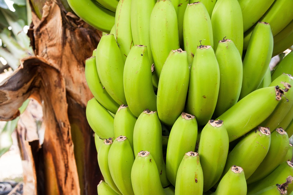 benefits of raw banana