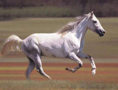 From 22,23,24,25 date, suddenly the white horse will run faster than the people of these 5 zodiac signs.