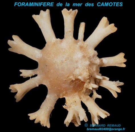 mer-des-camotes-4-(3)