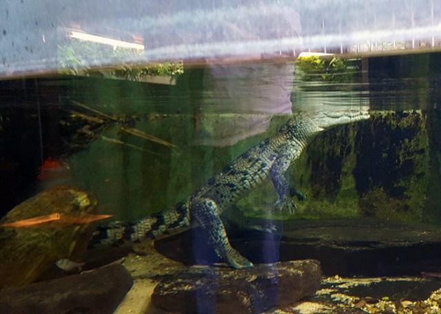 parc merveilleux bettembourg aligator 1