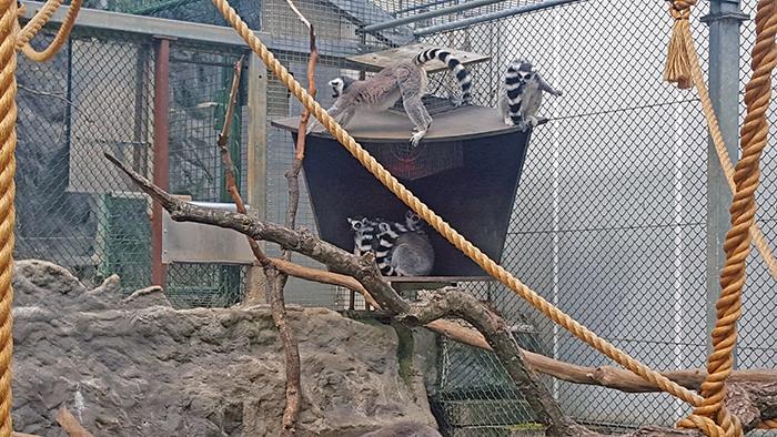 parc merveilleux bettembourg lemurs