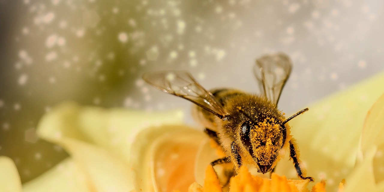 Bee thriftily!