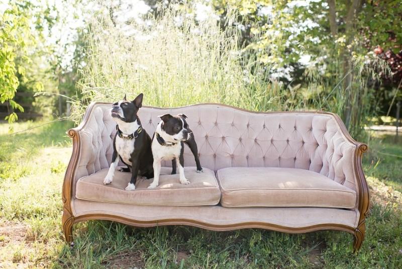 ramona_dogs