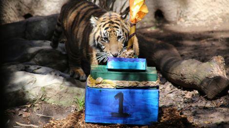 Birthday Celebration at the Zoo!