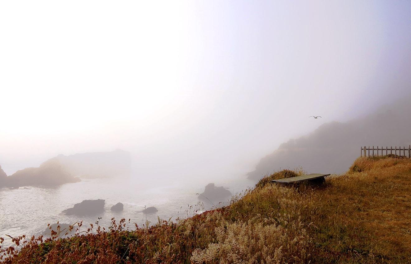 Fog & Light
