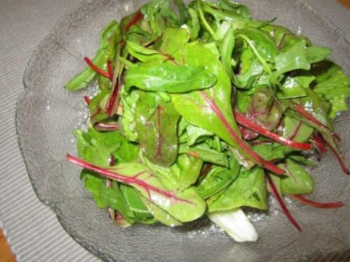 Baby-Mangold ist toll für Salate! Mit Rucola und Romana ein echter Frühlingsknüller!
