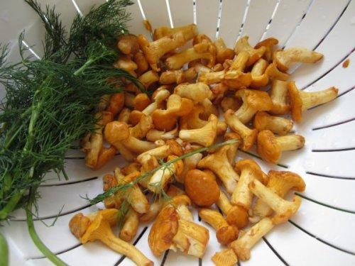 Frische Pfifferlinge (bayrisch Reherl) und Dill. Nehmen Sie die kleinen Pilze, sie sind aromatischer!