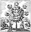 THE TREE OF ALCHEMY.