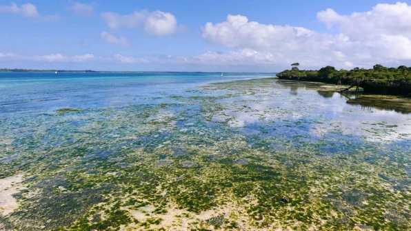 Coral beach Zanzibar