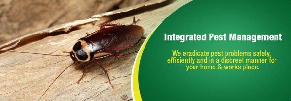 ticks new york state integrated pest management - 1150×400
