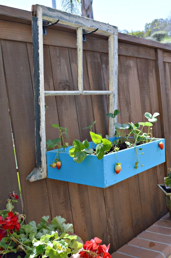 DIY Window Box from old window and drawer by My Uncommon Slice of Suburbia