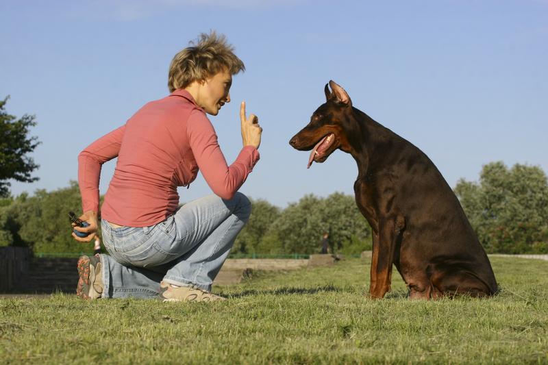 dog trainer insurance sadler company inc