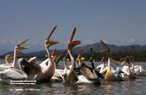 Saevus Lucs-home-town-6 Birding in  Lucy's homeland Exploration  lake longano lake awasa ethiopia bale national park arba minch addis
