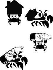 Saevus Small-Wonder_Hermit_Crab_nov_dec2013-229x300 Small Wonders  - Homebodies Small Wonders The Animal Kingdom  Masked hunter Lacewing larvae Hermit crab Bagworm