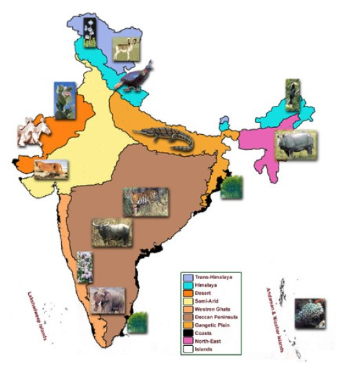 Saevus dddd-272x300 The Eco-vistas of India : Know them this International Biodiversity Day (22 May) Day's Special  Wildlife Institute of India north east islands International Day for Biodiversity india himalaya ghats gangetic plain eco-zones deccan Coast biodeversity