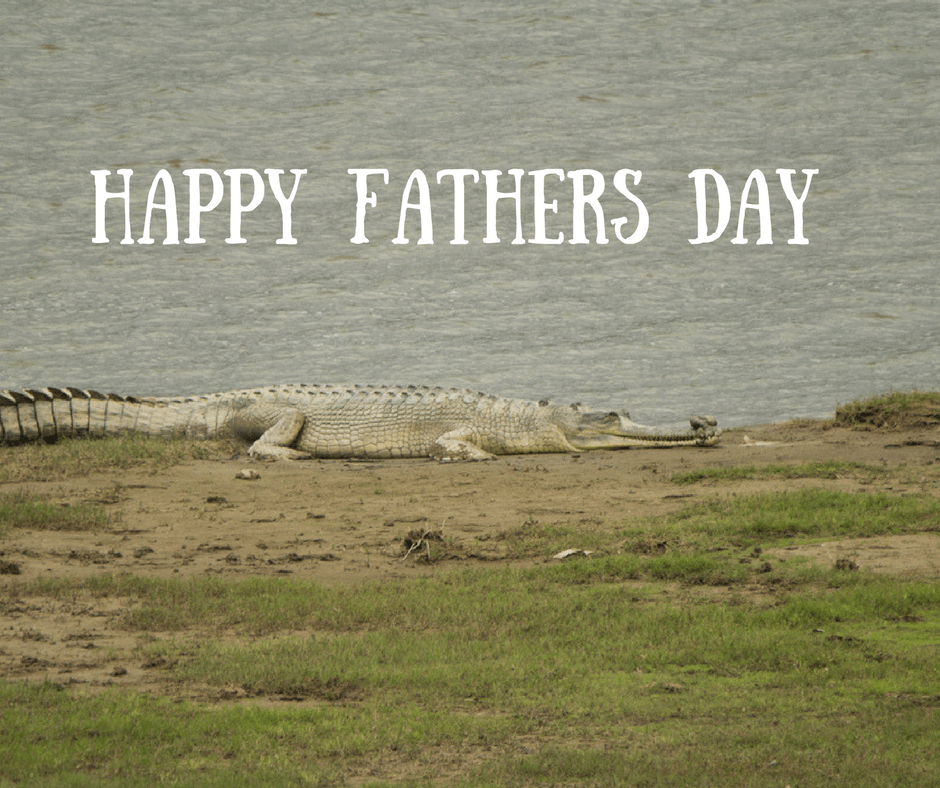 Saevus Happy-Fathers-Day Wild and Caring Fathers! Day's Special  piscivorian Nepal india Gharial Fathers Day