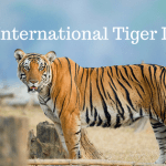 Saevus Its-International-Tiger-Day Global Tiger Day : Best places to spot tigers in India Day's Special  Tadoba National Park Ranthambore National Park Periyar Tiger Reserve Pench National park Kanha Tiger Reserve International Tiger DAy Global Tiger Day Corbett National Park