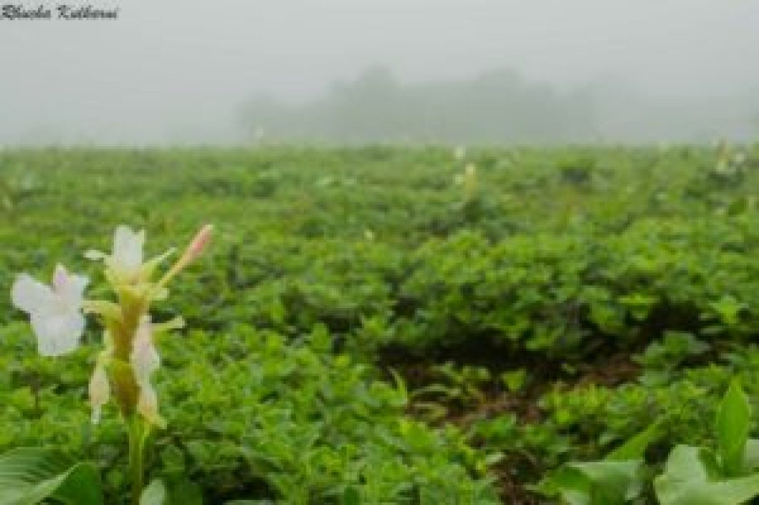 5 REASONS TO VISIT KAAS THIS MONSOON!_Kaas Plateau