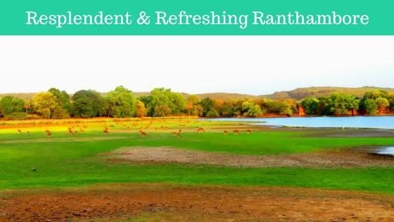 Resplendent & Refreshing Ranthambore