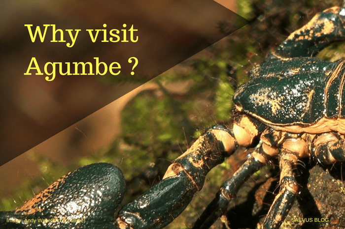 WHY VISIT AGUMBE | REASONS TO VISIT AGUMBE | TRAVEL GUIDE