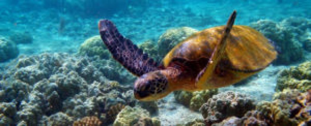TRAVEL GUIDE TO GULF OF MANNAR MARINE NATIONAL PARK