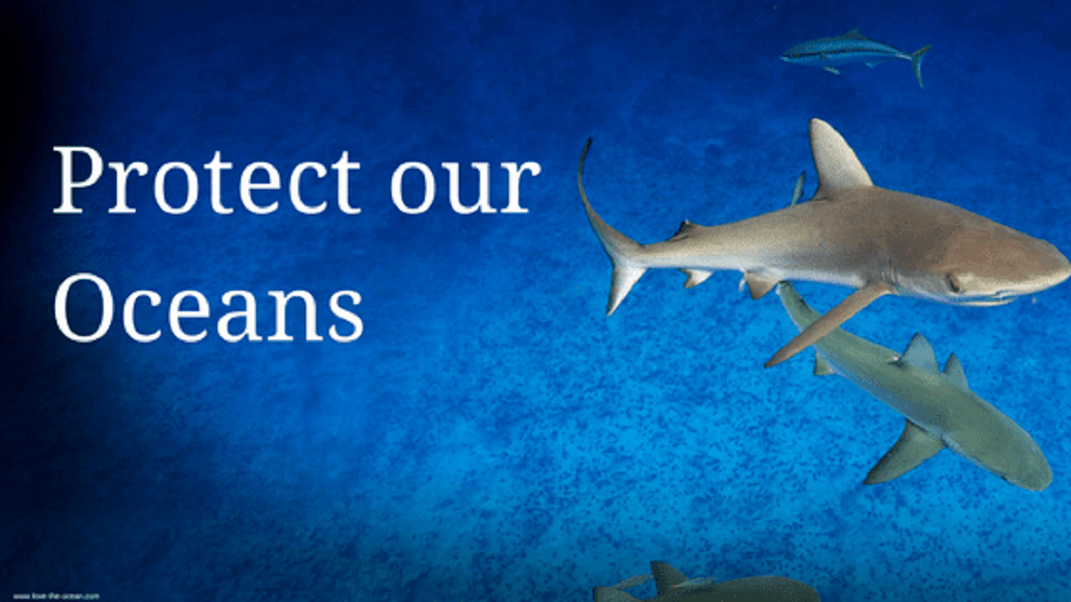 It's time to protect our Ocean